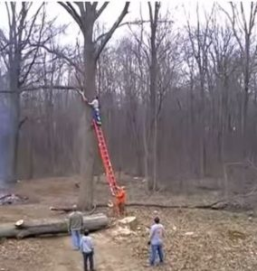 tree limb safety hazard