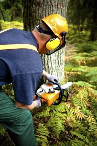 Tree Cutting Adventures Guided by Your Safety Management Plan--Call to Action!
