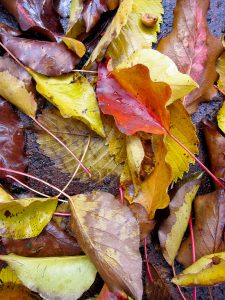 Slipping into Autumn Safety with a Safety Management Course--Call to Action!